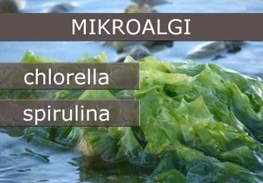 Mikroalgi
